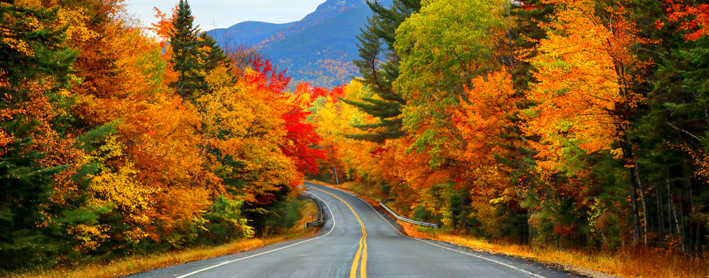 Fall colours special report